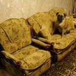 Обивка мягкой мебели в Щербинке